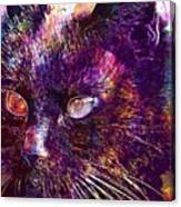 Cat Black View Close  Canvas Print