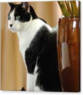 Cat Contimplation Canvas Print