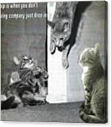 Cat Dropping In Canvas Print