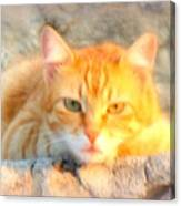 This Cat Has Been Waiting A Long Time For The Mouse  Canvas Print