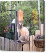 Cat In A Birdbath Canvas Print