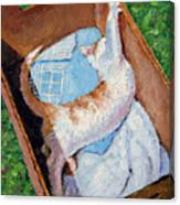 Cat In A Box Canvas Print