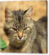 Cat In A Yard Canvas Print