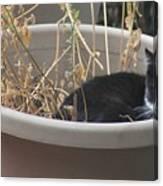 Cat In Flower Pot. Canvas Print