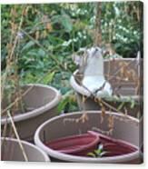 Cat In Flowerpot Canvas Print
