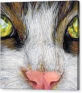 Cat In Pastel Canvas Print