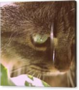 Cat In Sunlight Canvas Print