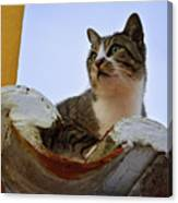 Cat In The Roof Canvas Print