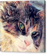 Cat Jasper Canvas Print