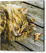 Cat Lie Wood Floor Canvas Print