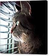 Cat Looking Out Window Canvas Print
