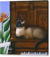 Cat Missy On Piano Canvas Print