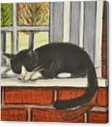 Cat Nap In Window Canvas Print