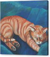 Cat Napping Canvas Print