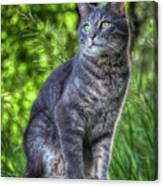 Cat On A Post Canvas Print