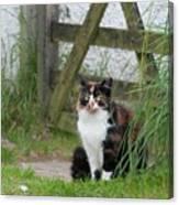 Farm Cat On Duty Canvas Print