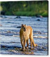 Cat On The River Canvas Print