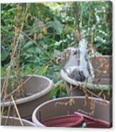 Cat Playing In Flowerpot Canvas Print