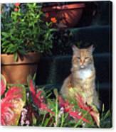 Cat Postcard Canvas Print