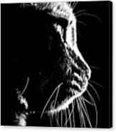 Cat Silhoette Canvas Print