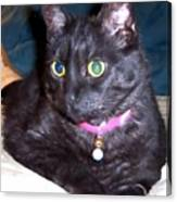 Cat Stare Canvas Print