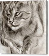 Cat Study Drawing No One Canvas Print