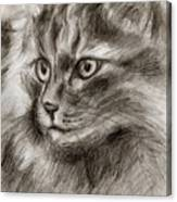 Cat Study Drawing No Two Canvas Print