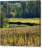 Cat Tails In The Sun Canvas Print