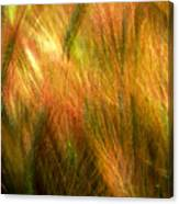 Cat Tails Canvas Print