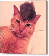 Cat Wearing A Wig Canvas Print