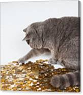 Cat With Coins Canvas Print