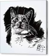 Cat With Ink Canvas Print