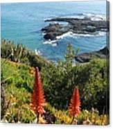 Catalina Island Coastline Canvas Print