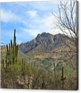 Catalina State Park 2 Canvas Print