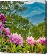 Catawba Rhododendron At The Craggy Canvas Print