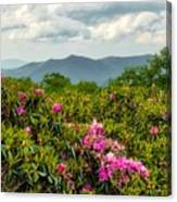 Catawba Rhododendrons Canvas Print