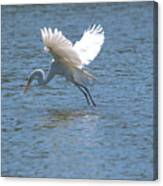 Catch Of The Day Series - 3 Canvas Print
