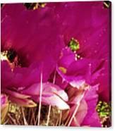 Catcus Flower Canvas Print
