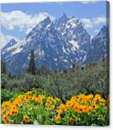 Dm9328-cathedral Group Tetons  Canvas Print