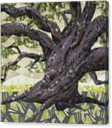 Cathedral Oak Canvas Print