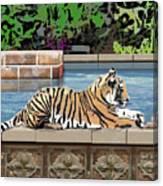 Catnap Canvas Print
