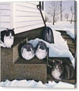 Cats - Jake's Mousers Canvas Print