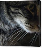 Cats Eye Canvas Print