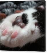 Cats Paw Canvas Print