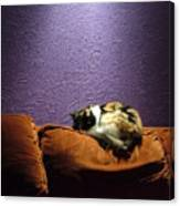 Cats Sleep In Odd Places Canvas Print