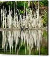 Cattail Reflection Canvas Print