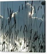 Cattail Sky Canvas Print
