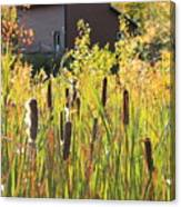 Cattails And Barn Canvas Print