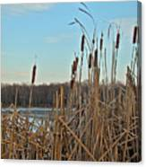 Cattails At Skymount Pond Pa Canvas Print