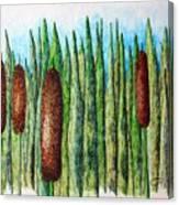 Cattails 1 Canvas Print